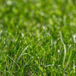 pielęgnacja terenów zieleni
