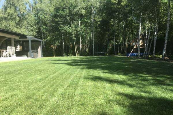 Piękny trawnik w sąsiedztwie lasu 2