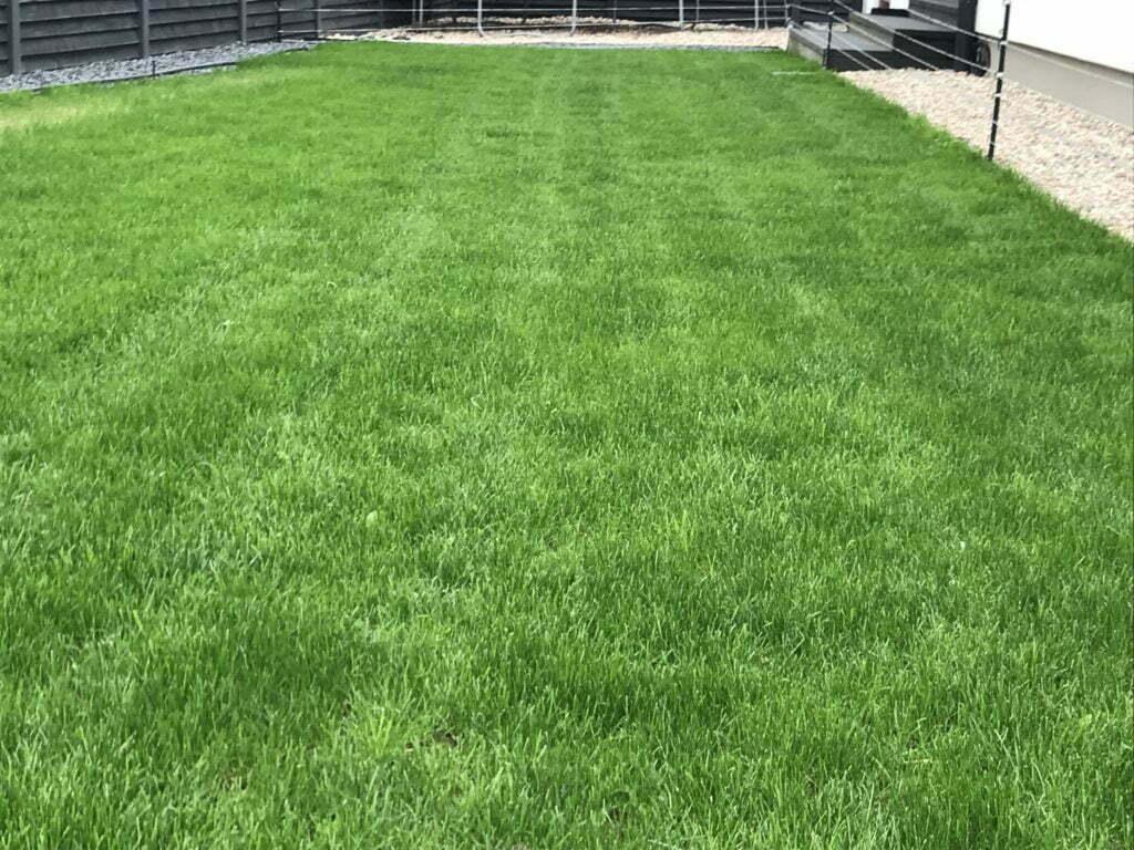 Geometryczny trawnik 5